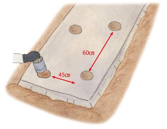 画像: 植え穴をあける
