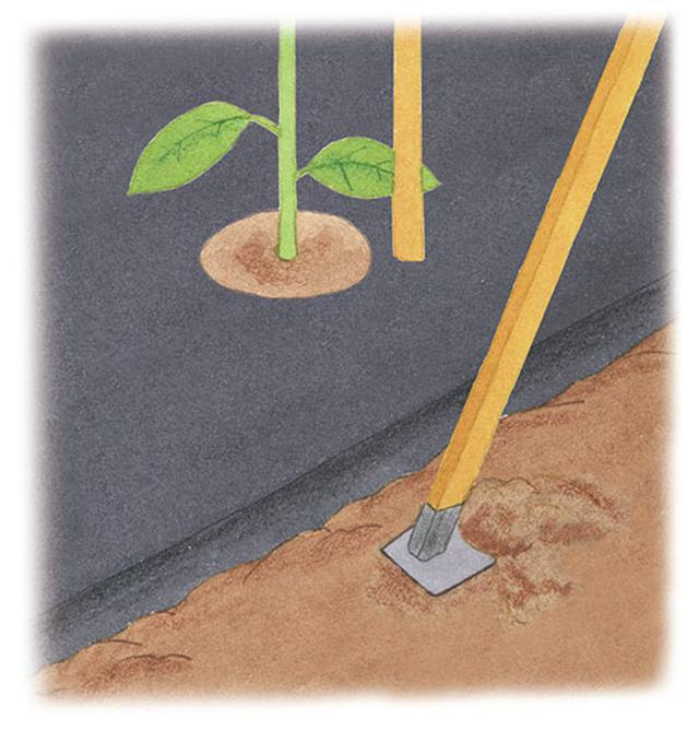 画像: 重要! 中耕して根に酸素を供給する