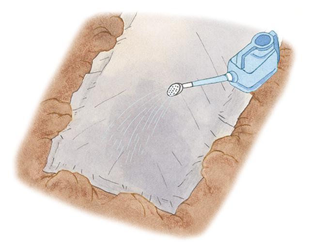 画像: 不織布をかけて水をやる