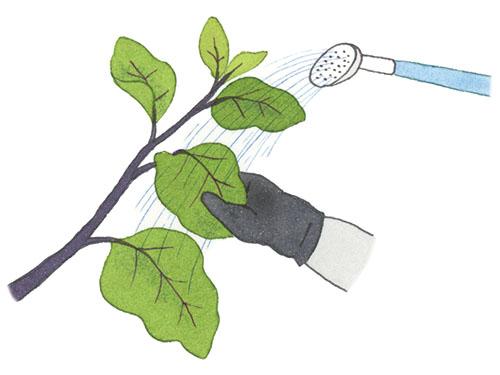画像: 虫は枝の先端や葉裏につきやすい。上からだけでなく、葉を裏返してかけることも忘れずに。