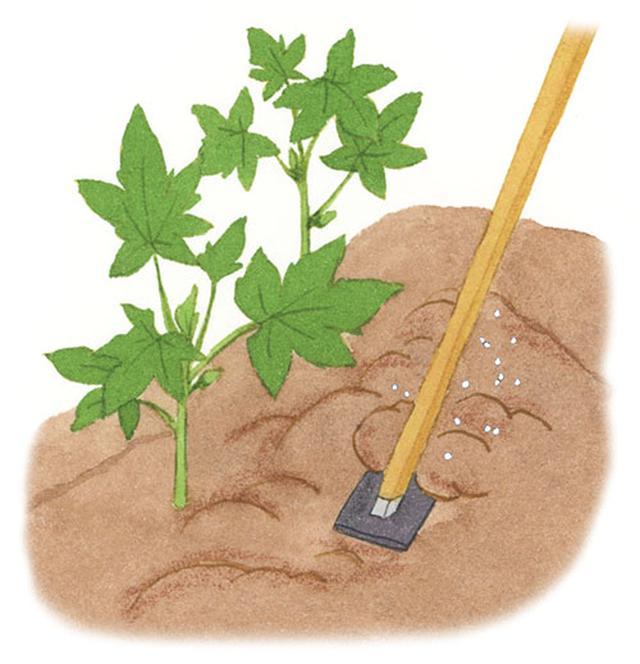画像: 畝の周囲のかたくなった土を、クワで耕す。耕した土に化成肥料をばらまき、クワでもう一度混ぜ込む。