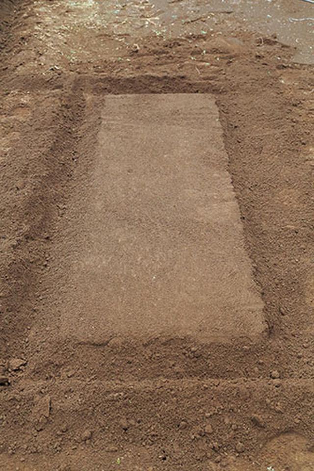 画像1: ④畝を立てる マルチを張る