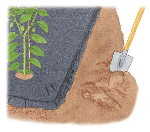 画像1: 周囲を耕す