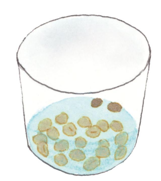 画像1: 【家庭菜園】オクラの育て方 初心者でも簡単「間引き・収穫」のコツ 保存方法や美味しい食べ方も紹介