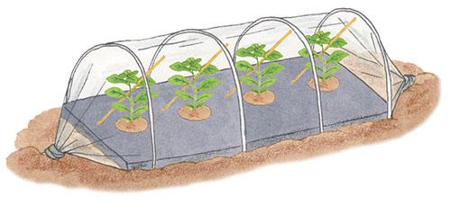 画像3: ①植えつけ