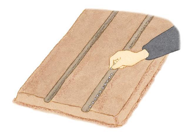 画像: 親指と人差し指でつまんだタネを、指でひねるようにして溝に落とし、1粒ずつ、均等にまく。