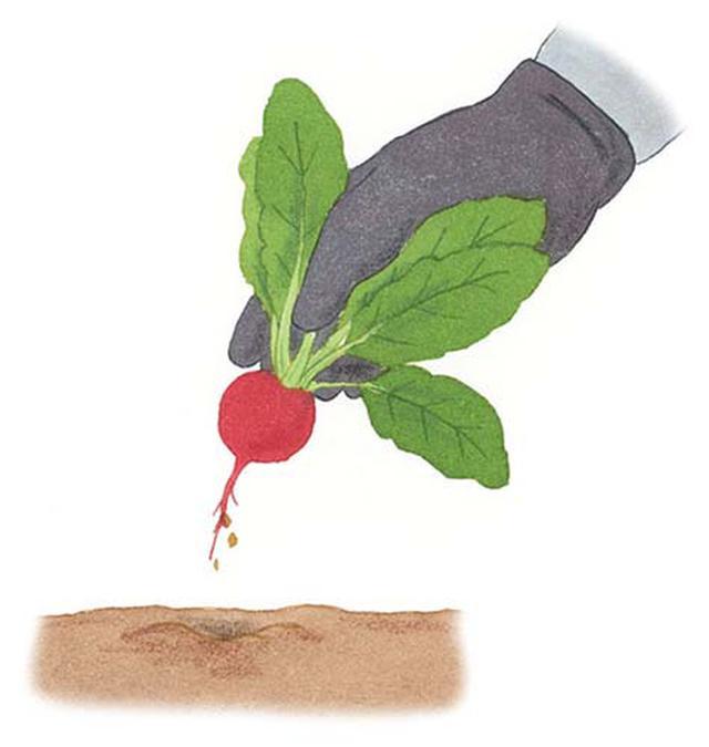 画像: 根を指で挟み、グッと引き抜く。