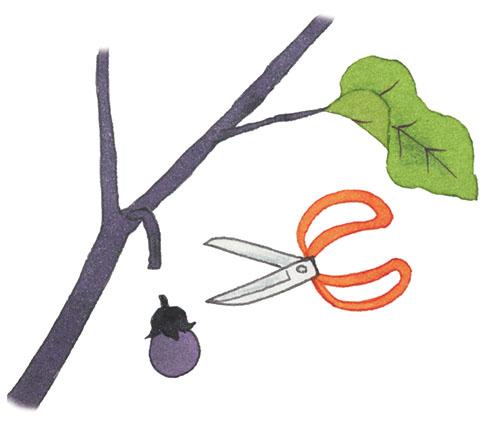 画像: 清潔なハサミで切り落とす。へたにはかたいとげがあるので気をつけよう。