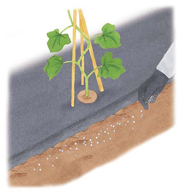 画像: 肥料をまく