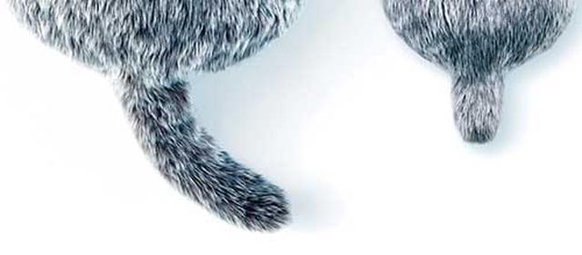画像: そっとなでるとフワフワ、たくさんなでるとブンブン。なで方で、しっぽの動きが変わり、遊び心がある。