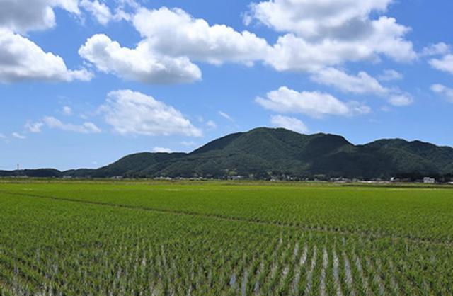 画像: 『下町ロケット』殿村さんの田んぼと国上山(くがみやま) www.city.tsubame.niigata.jp