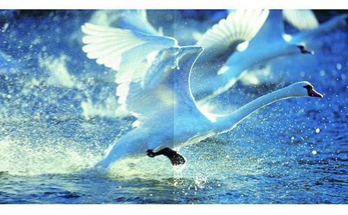 画像: 地デジ放送の精細感を復元し、ノイズ低減も行う「地デジAIビューティーPRO II」 www.toshiba.co.jp