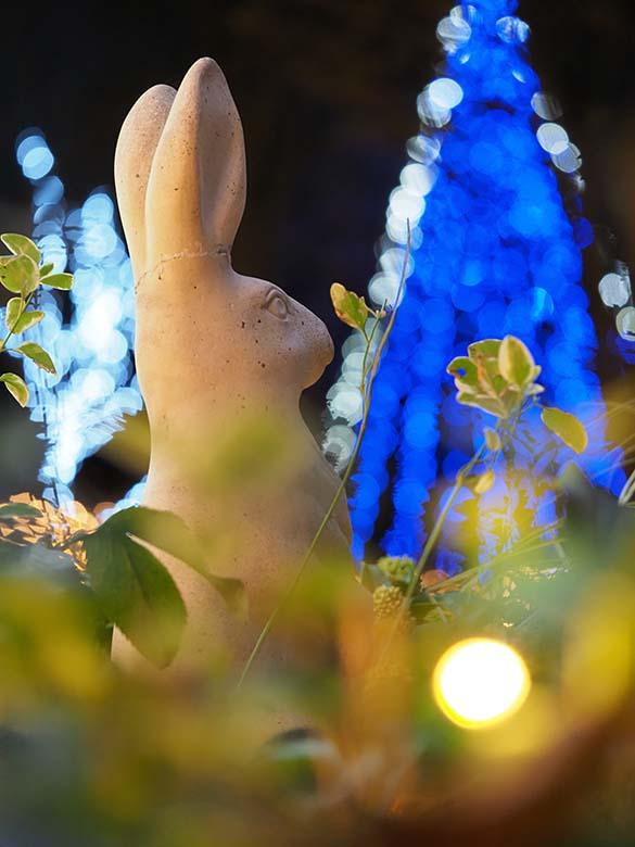 """画像: 使用レンズは120mm相当の中望遠マクロレンズ。その画角をイメージしながら、近づいて撮れる被写体を物色。そして、植え込みの中に置かれたウサギの像に着目。その斜め後ろの位置に移動し、カメラ位置を思いっきり下げる。そうする事で、背後に見える青白いイルミネーションと同時に、手前にある植え込みの光も""""点光源ボケ""""として取り入れた。 オリンパス OM-D E-M1 Mark II M.ZUIKO DIGITAL ED 60mm F2.8 Macro 絞り優先オート F2.8 1/25秒 +0.3補正 WB:晴天 ISO1600"""