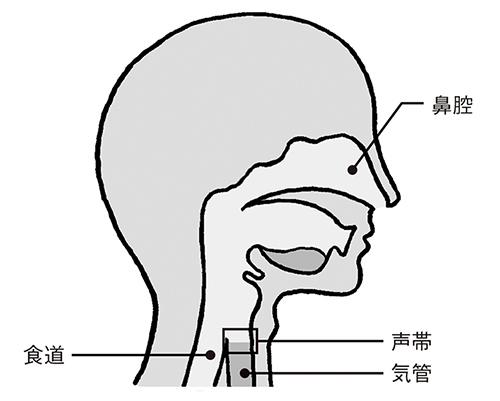 画像: 声帯の場所