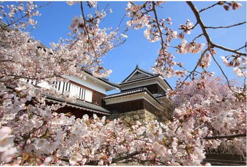 画像: 第18回上田城千本桜まつりの桜 www.city.ueda.nagano.jp