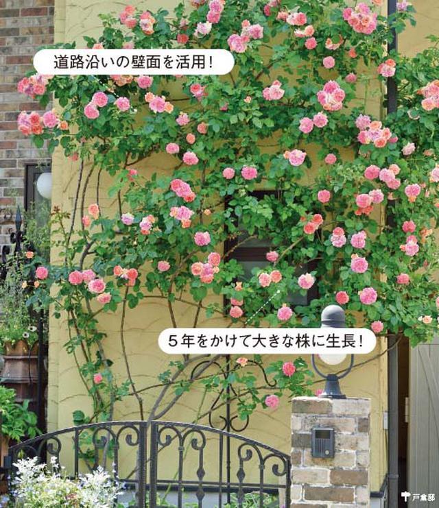 画像3: ミニチュアガーデンの実例 縦空間を活用して狭い庭を快適に演出