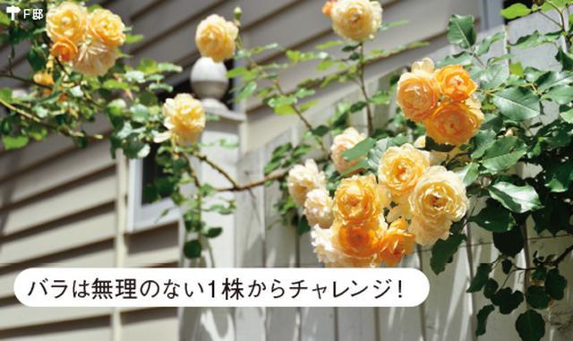 画像4: ローメンテナンスの庭の実例 植栽スペースを限定した手間をかけない庭づくり