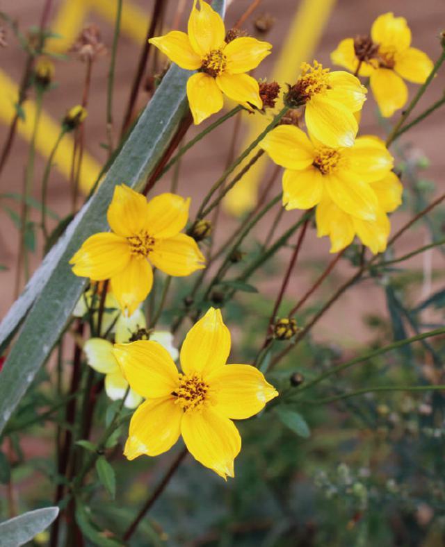 画像8: 植栽図