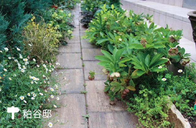 画像: 道の両端は複数の草花で覆うように