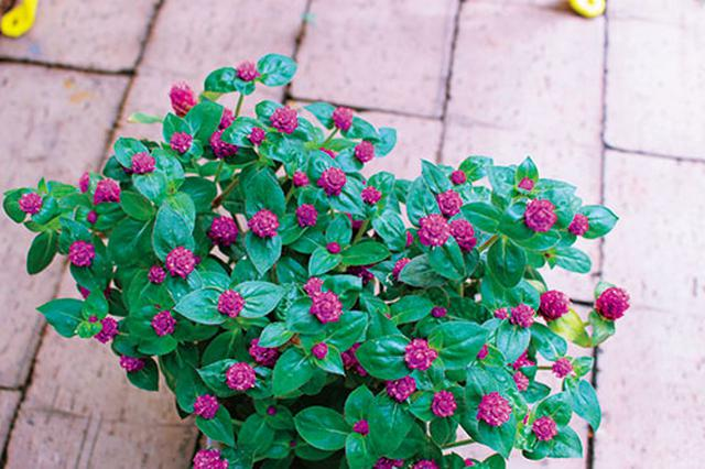 画像1: 季節を彩る素敵な花