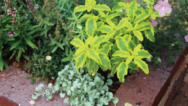 画像2: 春から初夏にかけては色どり豊かな花から爽やかな緑への変化を愛でて