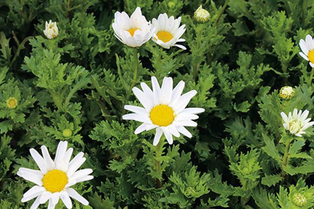 画像3: 季節を彩る素敵な花