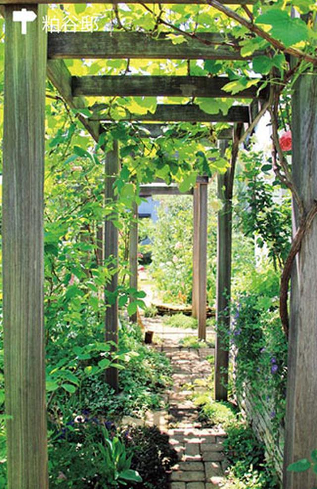 画像: ブドウが絡むパーゴラ