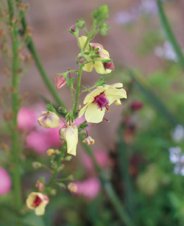 画像4: 春から初夏にかけては色どり豊かな花から爽やかな緑への変化を愛でて