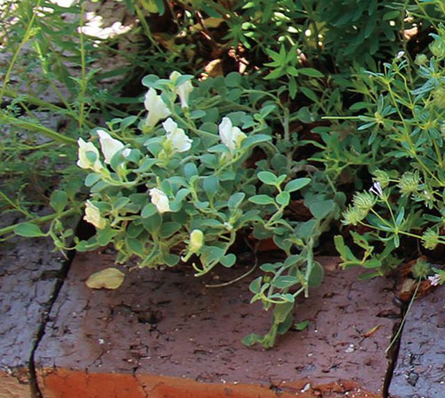 画像5: 花壇に立体感が出る草花