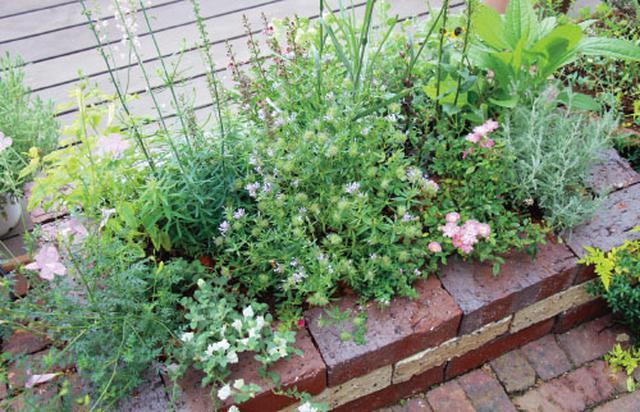 画像6: 春から初夏にかけては色どり豊かな花から爽やかな緑への変化を愛でて