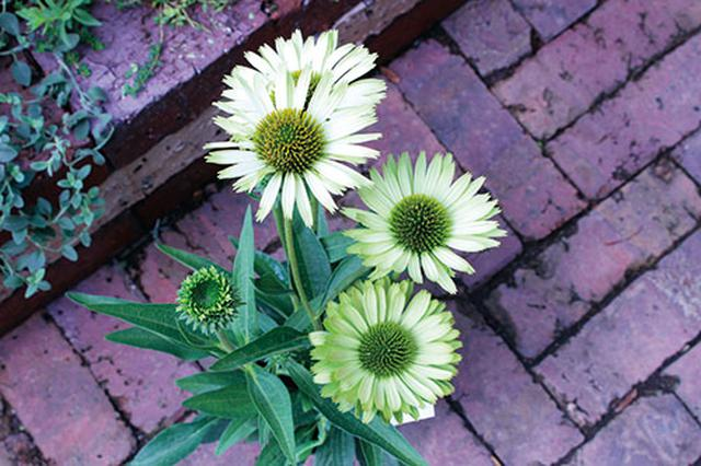 画像2: 季節を彩る素敵な花