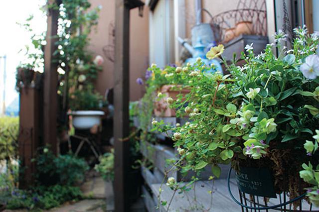 画像1: Technique5 手軽に季節感をプラスできる 寄せ植え&ハンギング