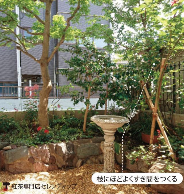 画像2: ▼ 剪定の工夫で木々の蒸れを防止