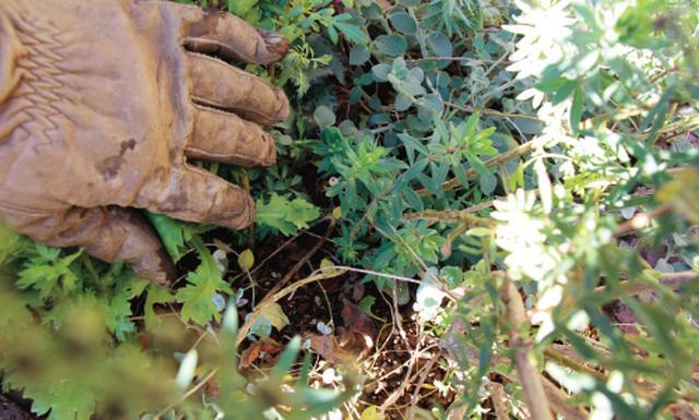 画像11: 植栽図