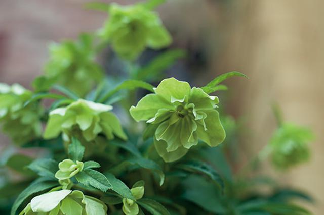 画像: ▼IDEA 日陰、半日陰を好む植物も種類は豊富にある