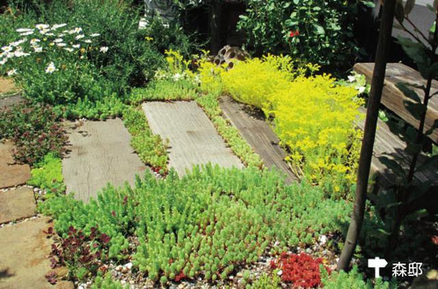 画像: 枕木の目地には緑がこんもり