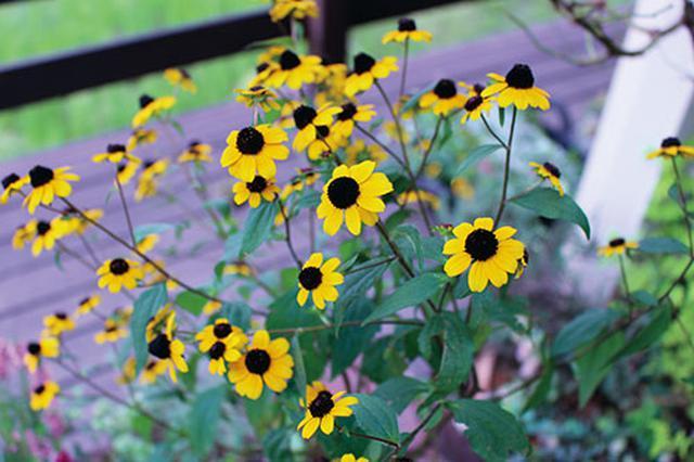 画像3: 花壇に立体感が出る草花