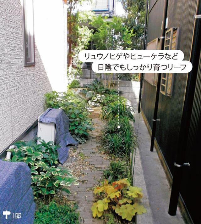 画像2: ▼ 日陰を好む植物で落ち着きのある大人の庭に