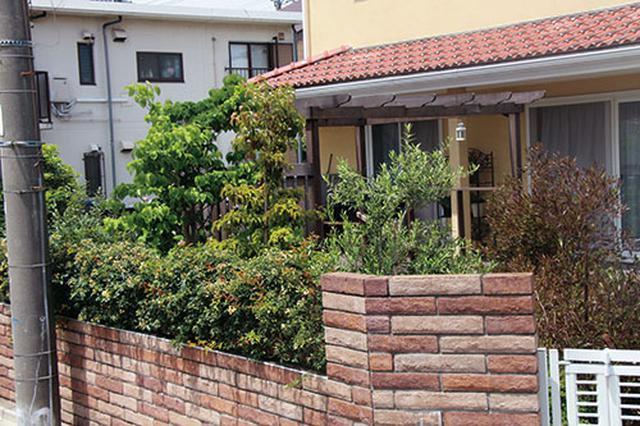 画像: ▼IDEA 目隠しには1年中葉をつけている常緑樹を