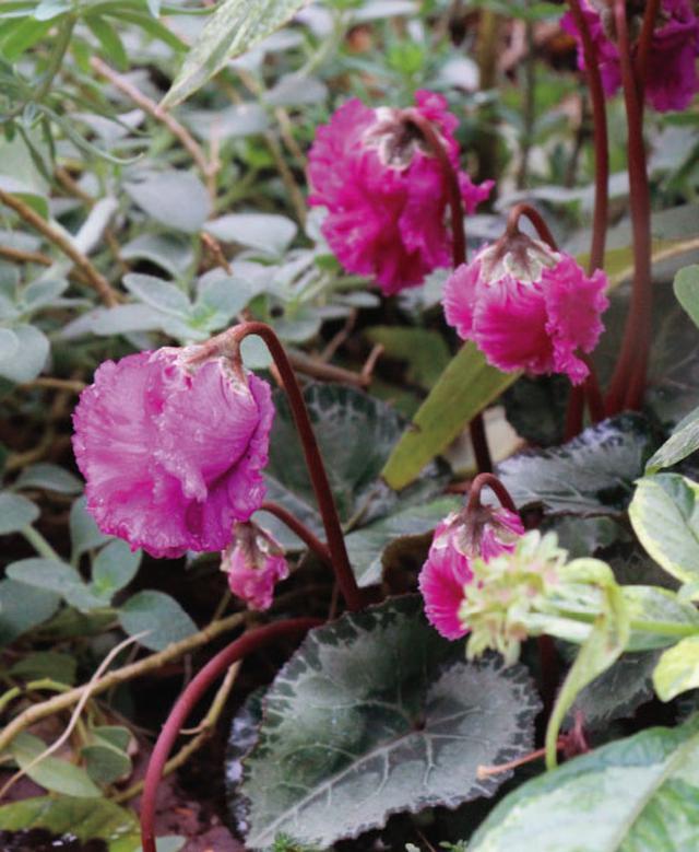 画像7: 植栽図