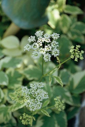 画像: カラーリーフや白い花がおすすめ