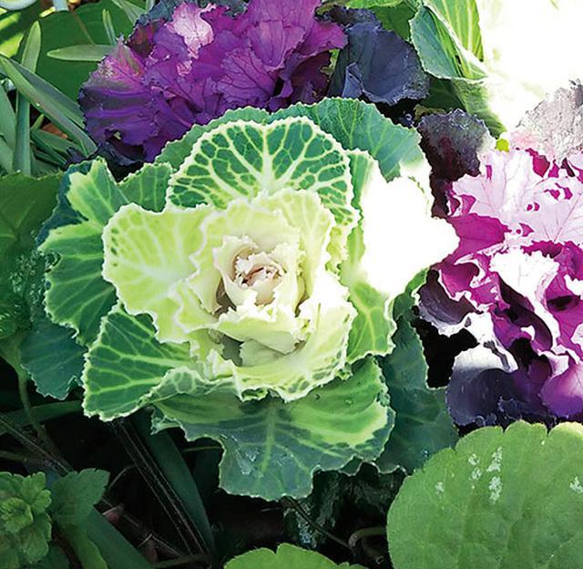 画像4: 季節を彩る素敵な花