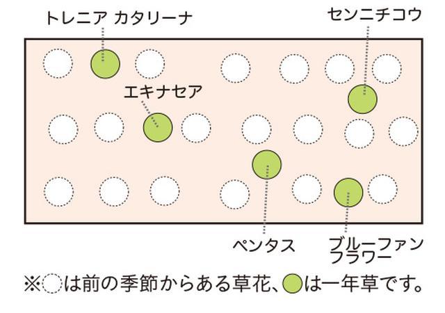 画像4: 植栽図