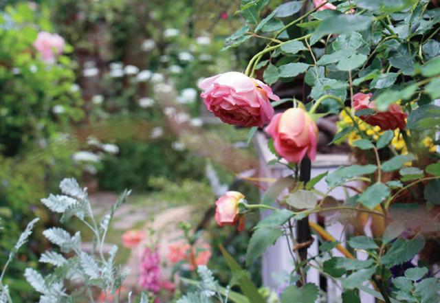 画像: 一気に芽吹く草花に生命力を実感する季節
