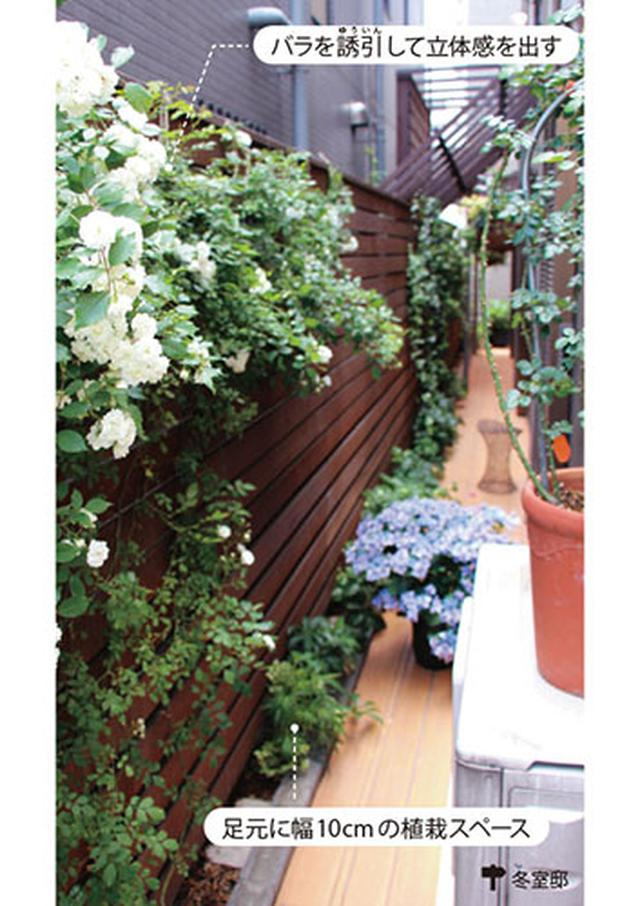 画像2: ▼ 幅60cmでも緑いっぱいの庭