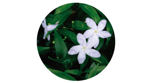 画像5: POINT フェンスに美しく絡むつる性植物