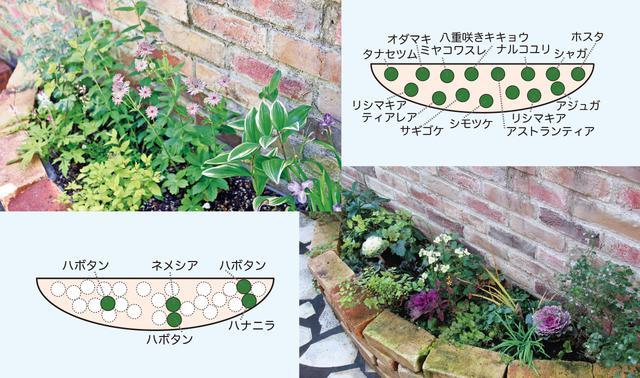 の 花壇 レイアウト 冬