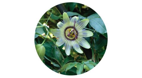 画像4: POINT フェンスに美しく絡むつる性植物