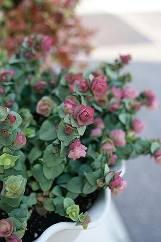 画像1: 花壇を埋める草花