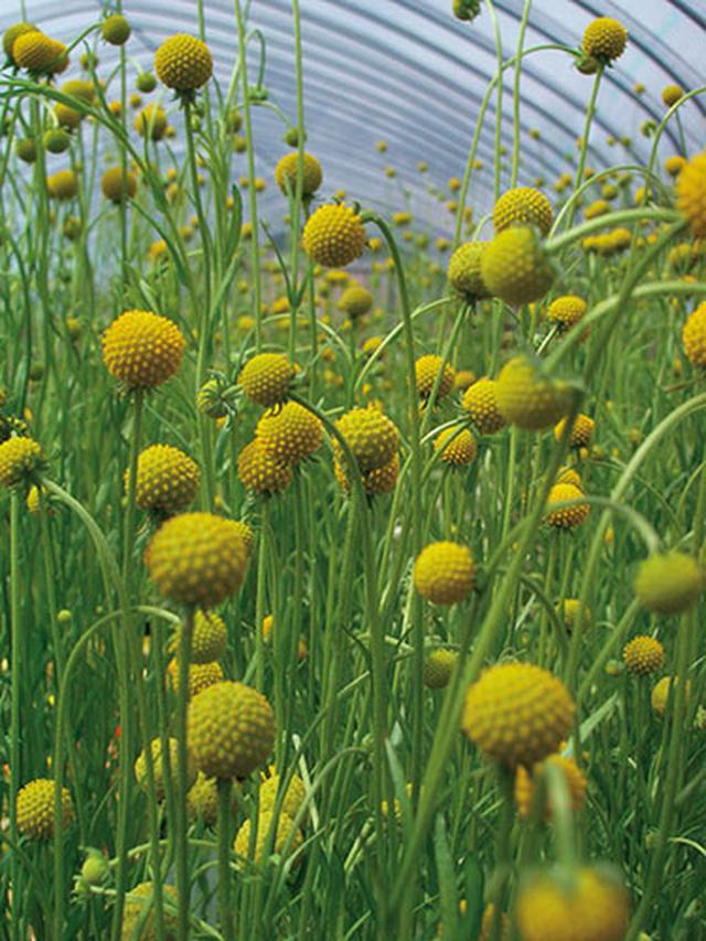 画像1: 花壇に立体感が出る草花